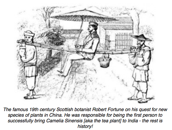 Robert Fortune in China